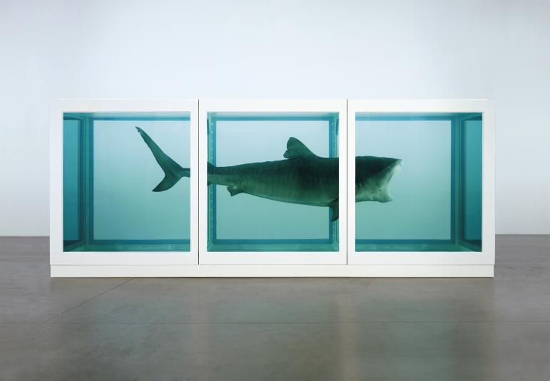 dead shark suspended in formaldehyde by Damien Hirst